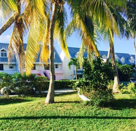 Treasure Cay Beach, Marina & Golf Resort: Hotel