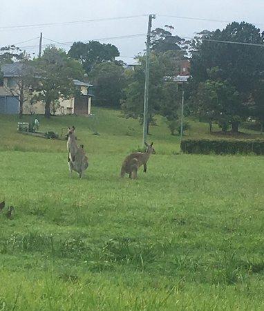 Woolgoolga, Australia: photo6.jpg