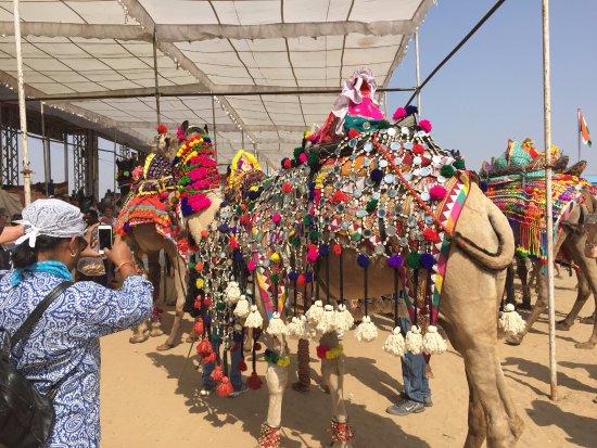 Cedar Park, TX: best dressed camel contest