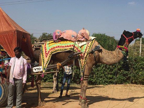 Cedar Park, TX: camel taxi service