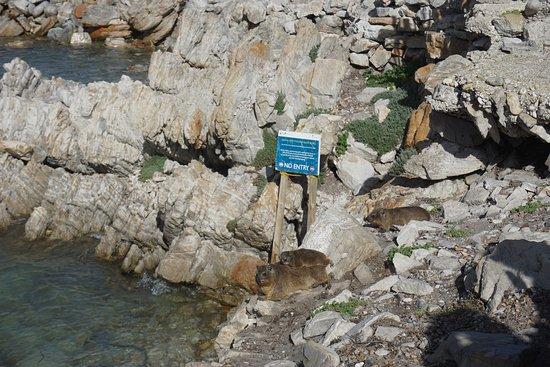 Strandfontein, South Africa: Stony Point - Dassies