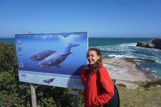 Strandfontein, South Africa: Hermanus