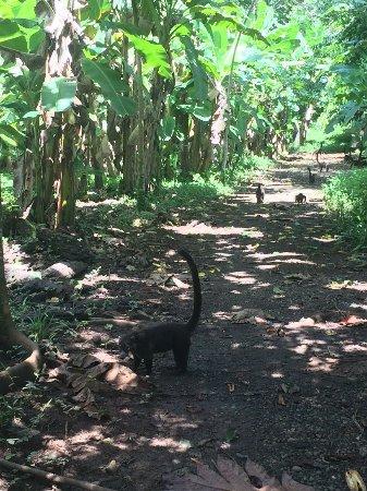 Boca Tapada, Costa Rica: IMG_1740_large.jpg