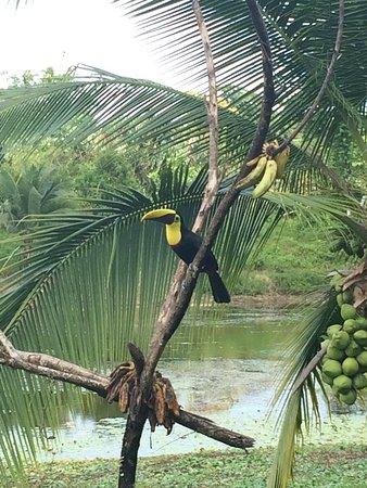 Boca Tapada, Costa Rica: IMG_1796_large.jpg