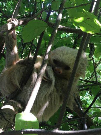 La Cruz, Costa Rica: This tour was amazing and very informative. We wanted to see a sloth and got lucky by seeing the