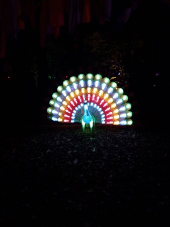Newport, UK: Robin Hill Diwali