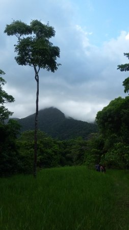 Cape Tribulation, Australia: Starting point of the walk