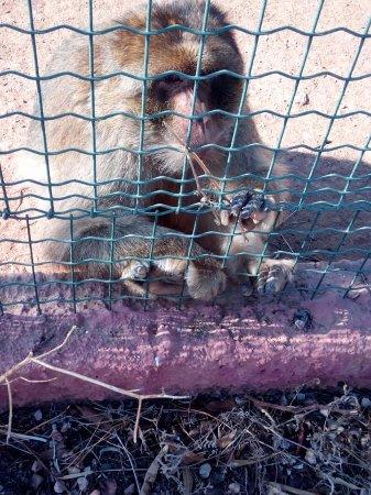 Spata, Grekland: Μαϊμού...εξαιρετικά κοινωνική!