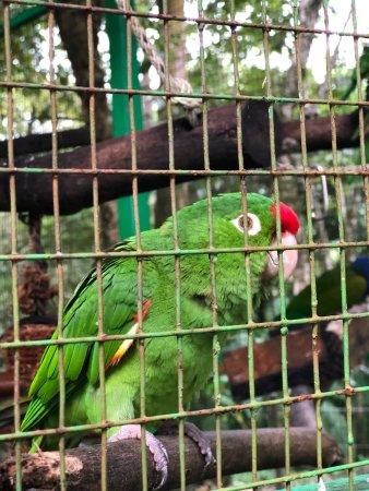 Dominical, Costa Rica: photo5.jpg