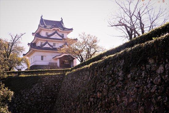 Uwajima, Japan: 懐かしい天守・・・見慣れた角度から・・・しかし、手前に並ぶ桜の木々は寿命を迎えているそうです