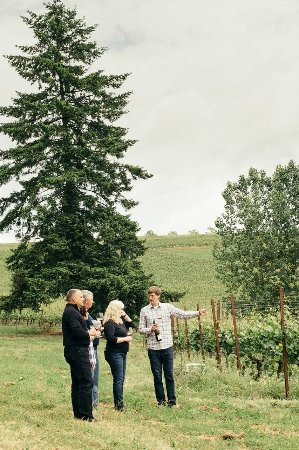 Dayton, Oregón: Schedule a private vineyard tour and picnic
