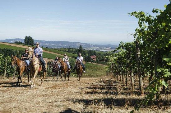 Dayton, Oregón: Schedule a vineyard tour by horseback