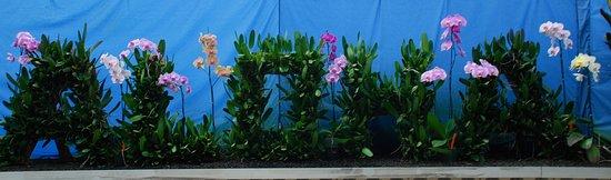 Keaau, HI: Akatsuka Orchid Garden