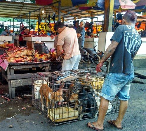 Tomohon, إندونيسيا: anjing yang sudah disiapkan dan yang akan di eksekusi