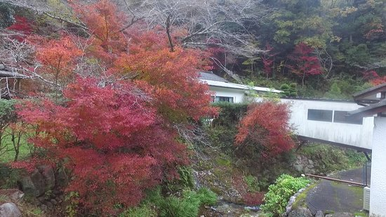 Mino, Japan: 敷地内には100本以上の色とりどりの紅葉が楽しめます