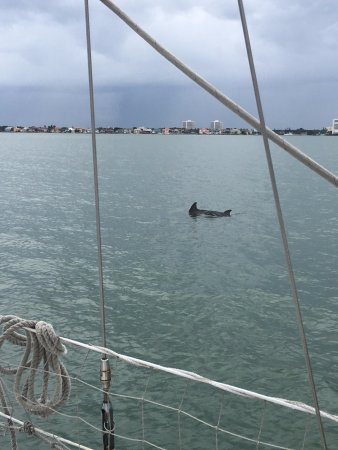 Dolphin Landings Charter Boat Center: You can see two fins here - a mother and baby!