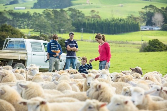 Matauri Bay, New Zealand: Kauri Cliffs Farm Tour