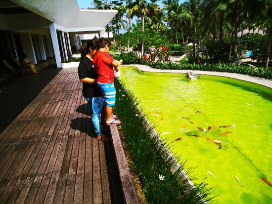 Covelong, Indie: Feeding the fish