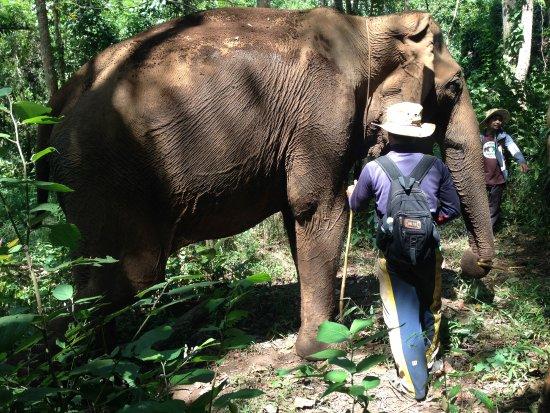 Sen Monorom, Kambodża: elephant