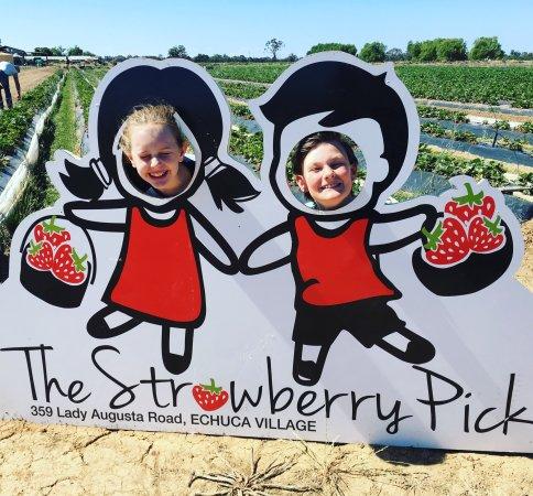Echuca, Australien: Having fun at The Strawberry Pick