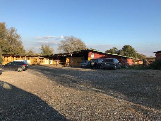 Asd Wild Ranch