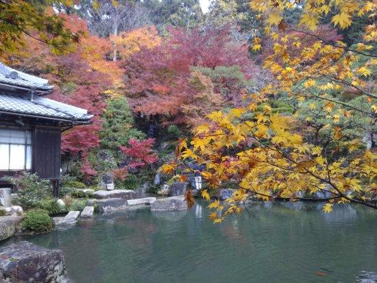 Higashiomi, Japan: 庭園(池の周りに遊歩道があります)
