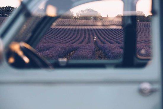 Сомен-де-Воклюз, Франция: La lavande