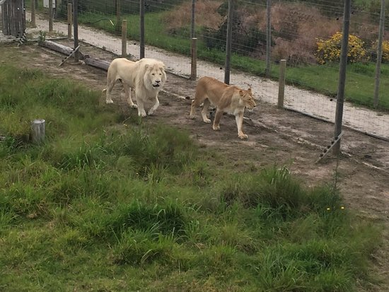 Tenikwa Wildlife Awareness Centre: photo2.jpg