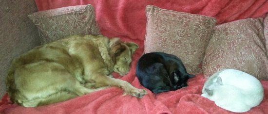 Minchinhampton, UK: Betsy, Ptolemy and Marianne relaxing on the sofa.