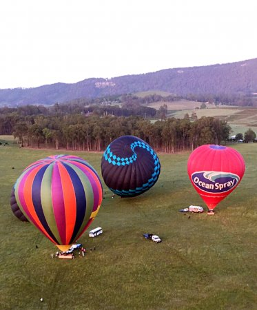 Pokolbin, Australia: A few of the hot air ballons.