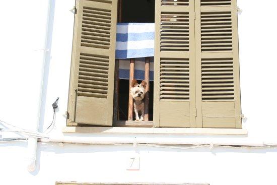 Porto Petro, Spanyol: wee dog