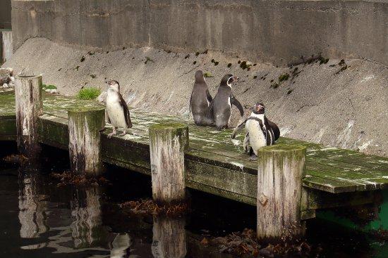 Atlanterhavsparken: Atlantic Sea Park