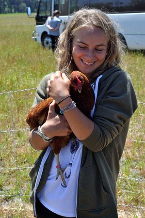 Genuinely Extraordinary Southern Forests Food and Farm Experience: CharCol Spring Pastured Egg Farm
