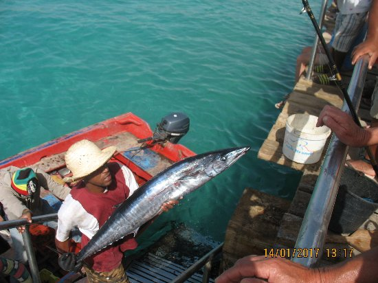 Hotel Oasis Belorizonte: Swieżutkie rybki -:)