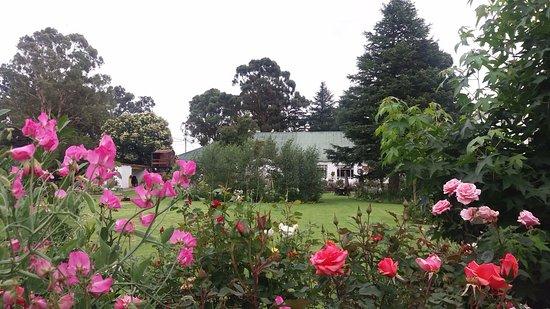 Van Reenen, South Africa: Pet friendly garden cottages available