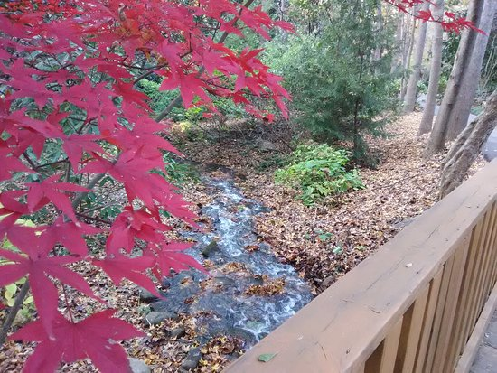 Hatcher Garden & Woodland Preserve : View from one of the bridges