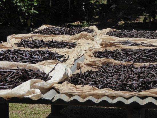 Patio, Fransk Polynesia: Séchage de la vanille