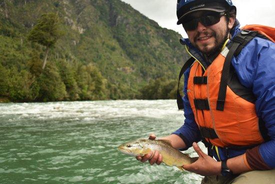La Junta, Chile: La captura de una hermosa trucha en las aguas del río Rosselot.