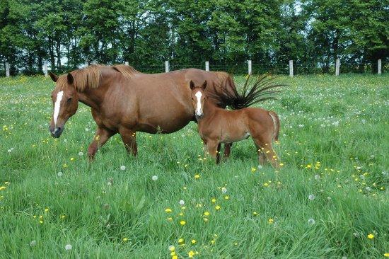 Saint-Vigor-le-Grand, Francja: Les chevaux du Haras