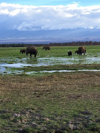 Amboseli National Park, Kenia: photo3.jpg