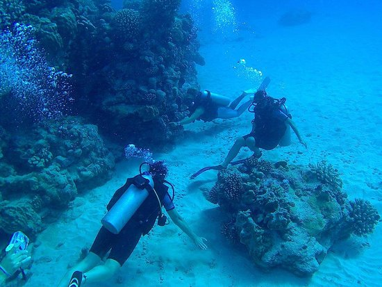 Pacific Divers : Checking out some coral