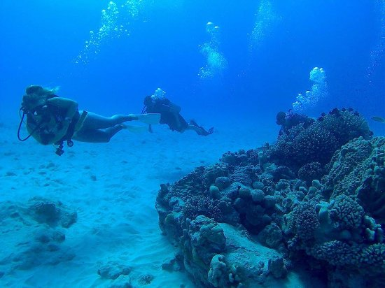 Pacific Divers : At 10-12m down, it feels like you're in a big blue room ha
