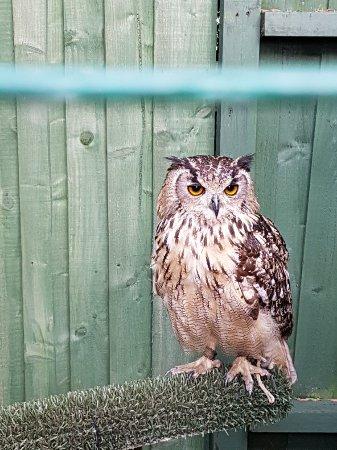 Oxenhope, UK: 20171118_131327_large.jpg