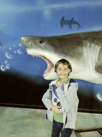 San Antonio Aquarium - All You Need to Know Before You Go ...
