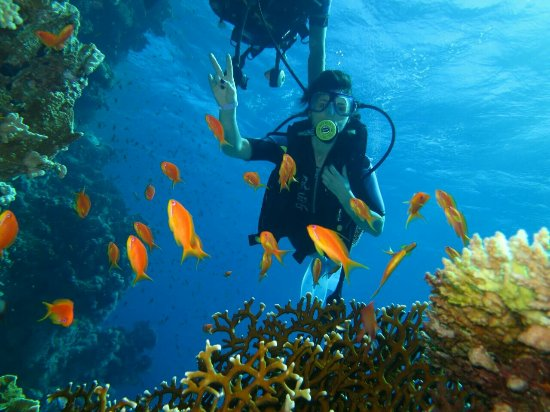 Red Sea Coral Reef Snorkeling at Ras Mohamed National Park with Lunch: IMG-20171109-WA0018_large.jpg