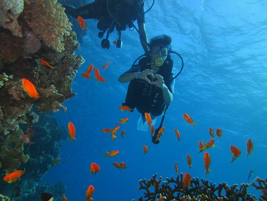 Red Sea Coral Reef Snorkeling at Ras Mohamed National Park with Lunch: IMG-20171109-WA0017_large.jpg