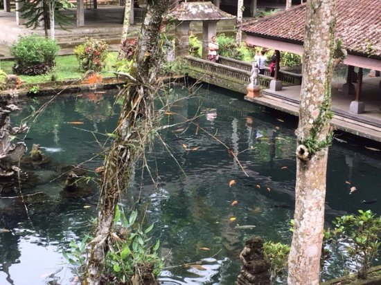 Tegalalang, Indonésie : photo1.jpg