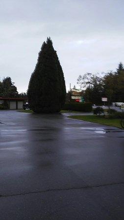 Arbutus Grove Motel: IMG_20171122_093416114_large.jpg