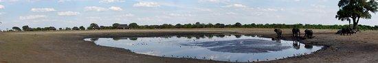 Hwange National Park – fénykép