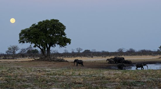 Hwange National Park Φωτογραφία